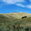 Shallow Prairie Valley, Small Conifer Grove, Lamar Valley, 380821_0407